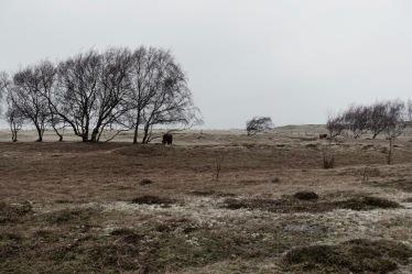 Die Büffelweide